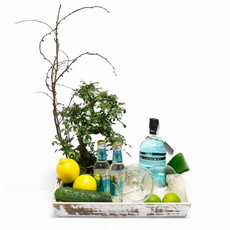 BONSAI AND GIN