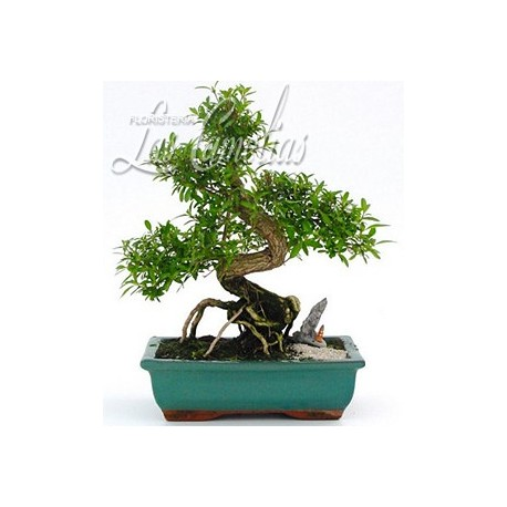 BONSAI NAGOYA