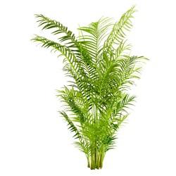 PLANTAS ARTIFICIALES 19028