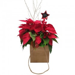 XMAS BAG POINSETTIA