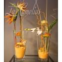 Plantas y Flores secas y artificiales